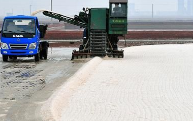 Crude salt market in Shandong